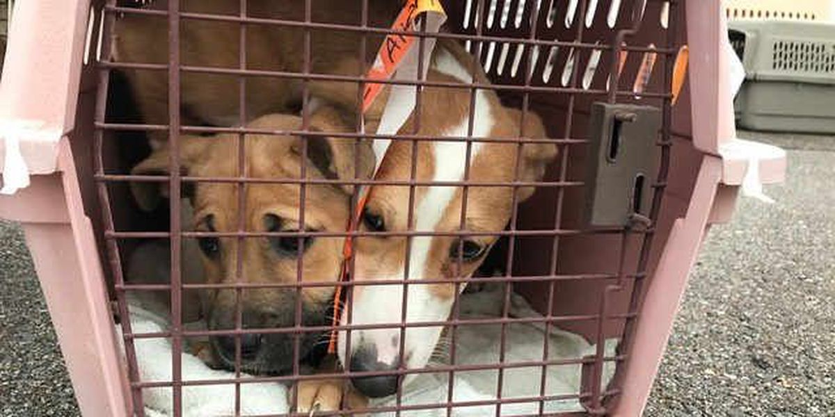 Wings of Rescue to place over 100 animals in new home