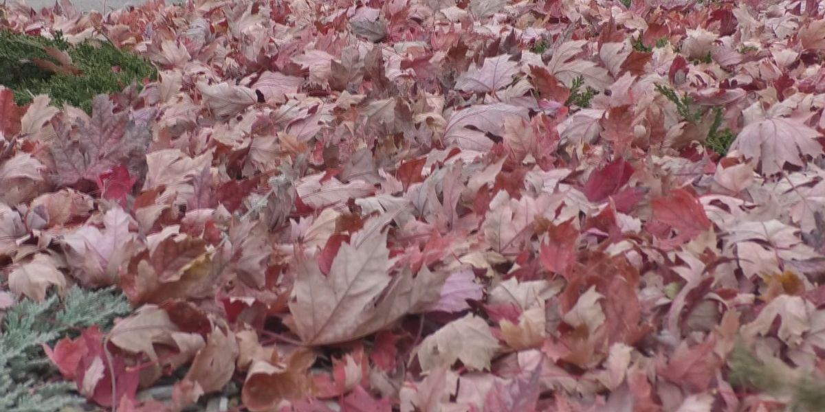 Breakdown: Why leaves get heavier when they are wet