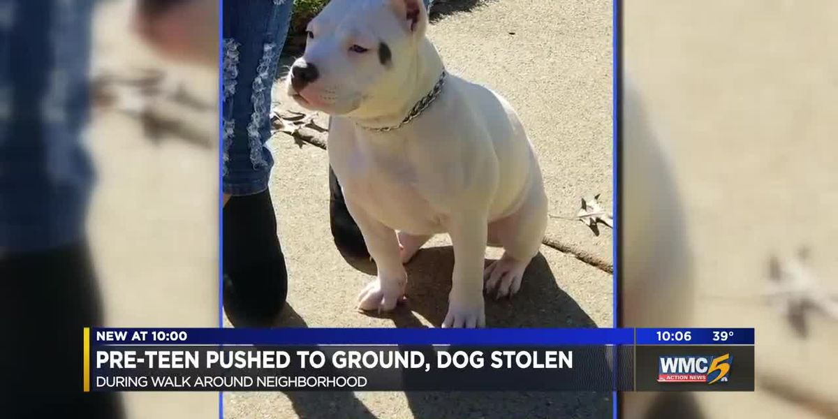 Man pushes, steals dog from 12-year-old boy
