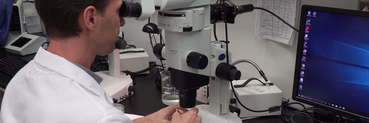 Best Life: Amazing zebrafish could cure human blindness - medicine's next big thing?