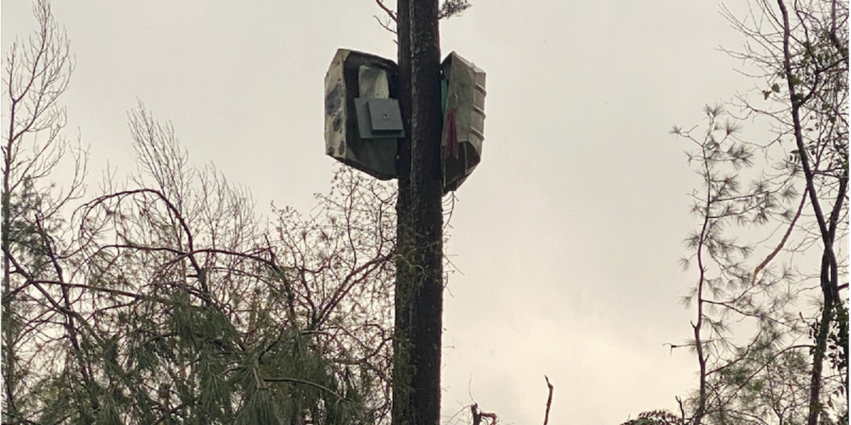 Boat wrapped around tree in west Alabama after apparent tornado