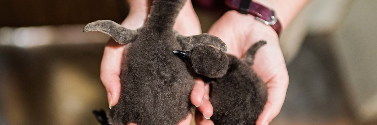 Oh babies! Memphis Zoo announces newest babies, including 1st of 2021