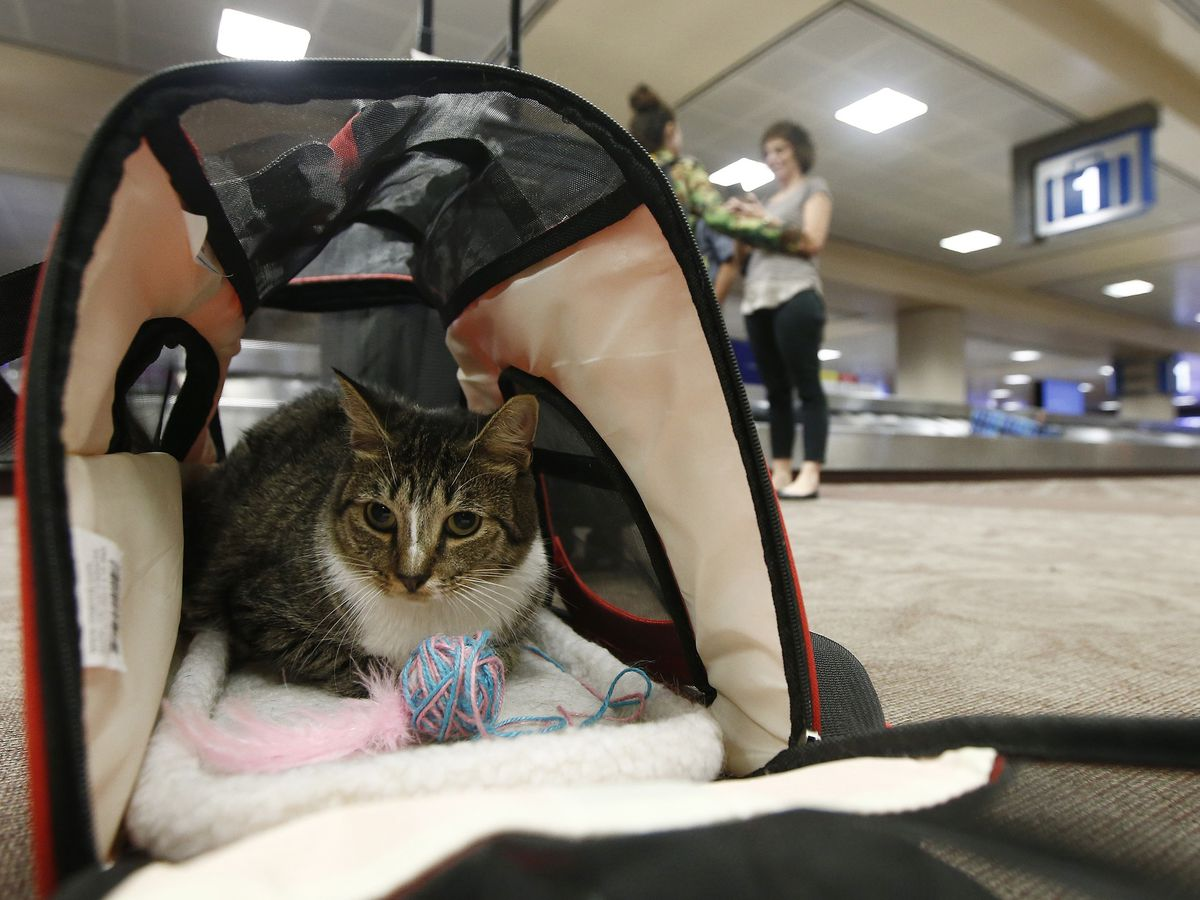 US seeks to tighten rules covering service animals on planes