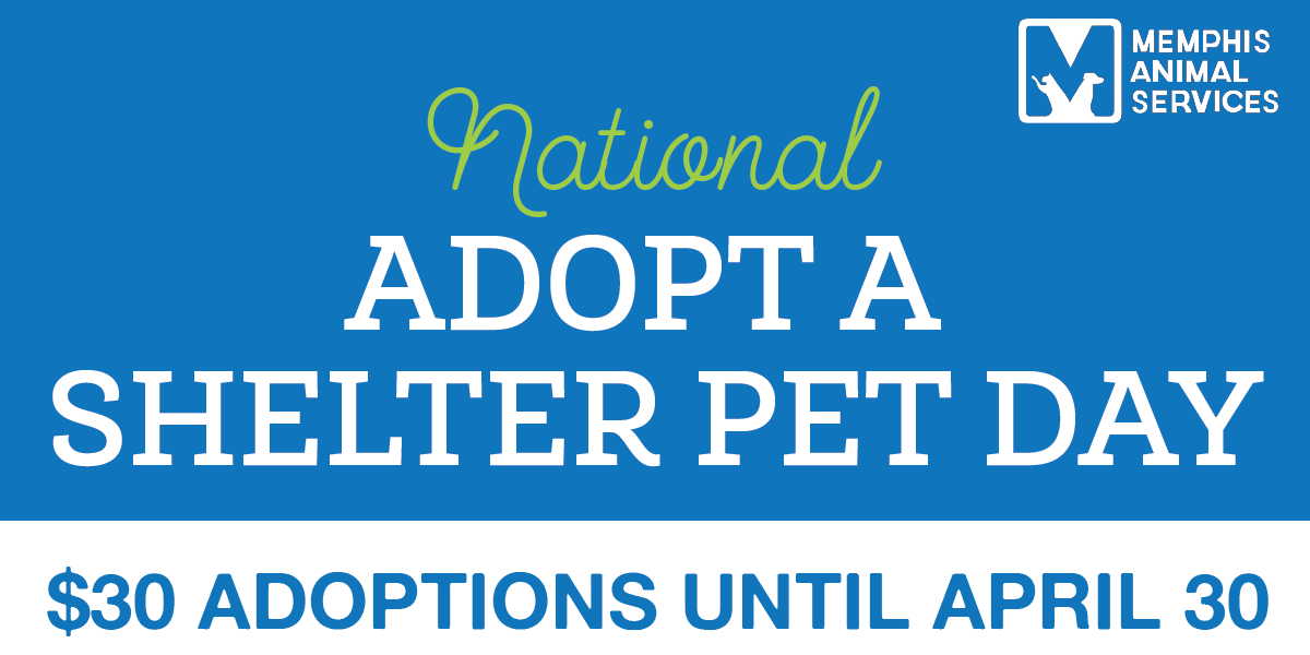 MAS offering $30 pet adoptions for the month of April