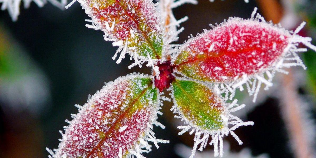 Breakdown: Why temperature is key in frost formation