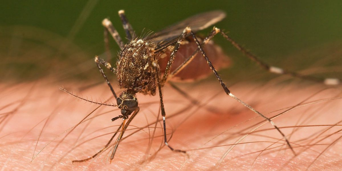 MS Department of Health confirms first case of West Nile virus in 2018