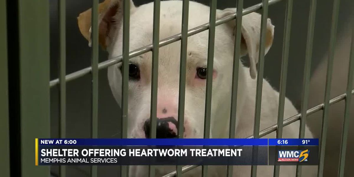 Memphis Animal Service now offers heartworm treatment