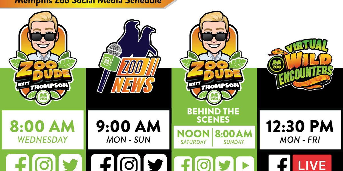 Memphis Zoo offers unique in-home experience for social-distancing zoo fans