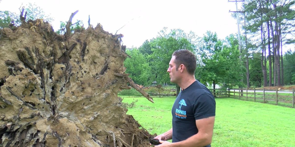 Experts: Soil to blame for falling trees