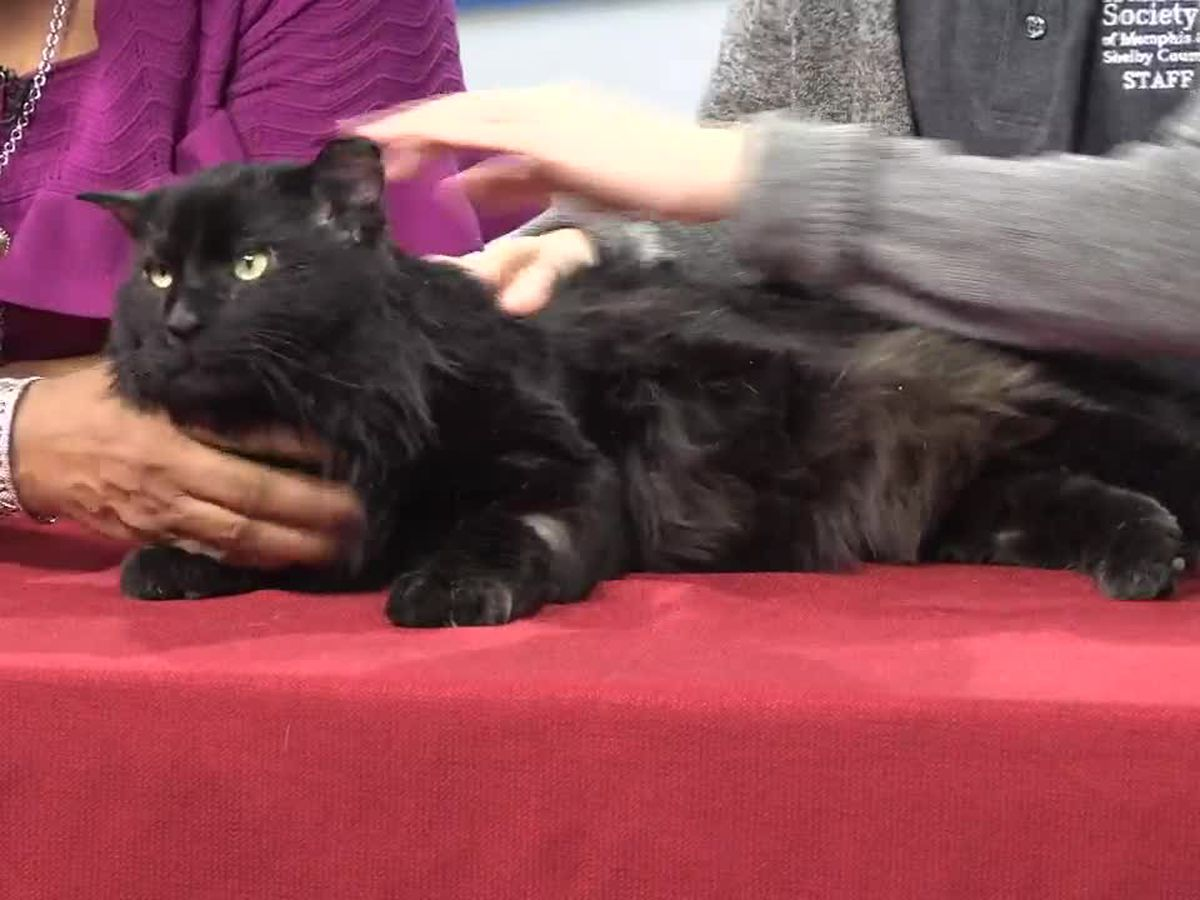 Pet of the Week: Chachi