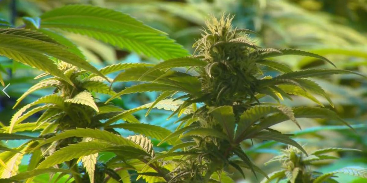Medical marijuana for Mississippi now rests with state Supreme Court