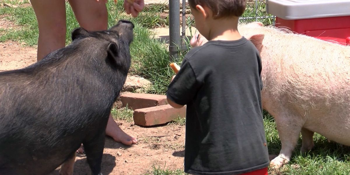 Arkansas woman fights ordinance to keep pot bellied pigs