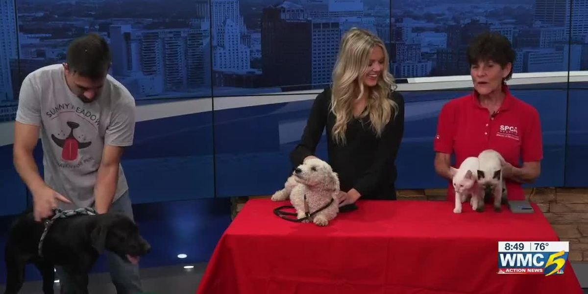 National Clear the Shelters Day featuring Pet of the Week, Roscoe