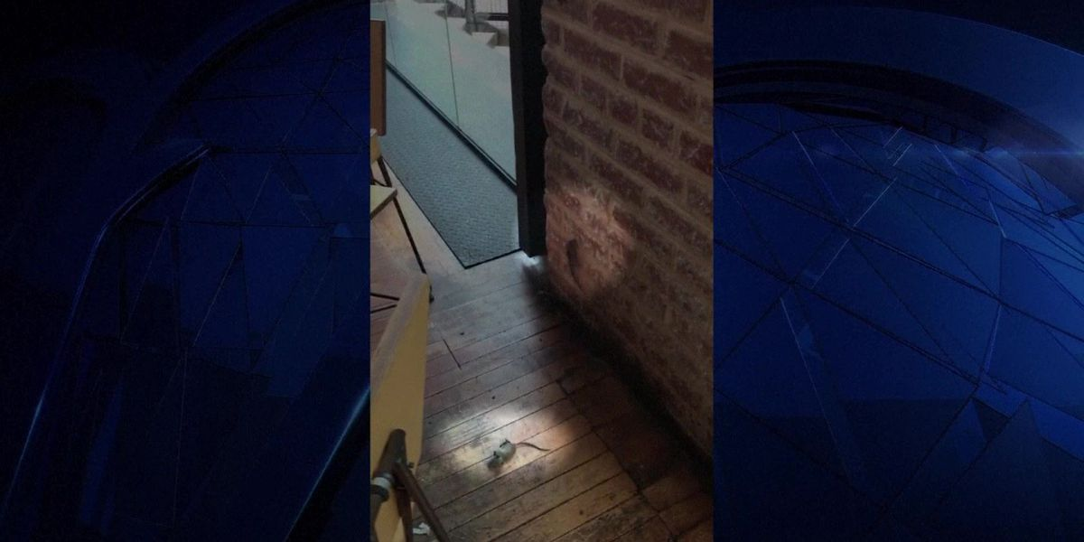 Rodents ruin lunch of Chipotle customers in Dallas