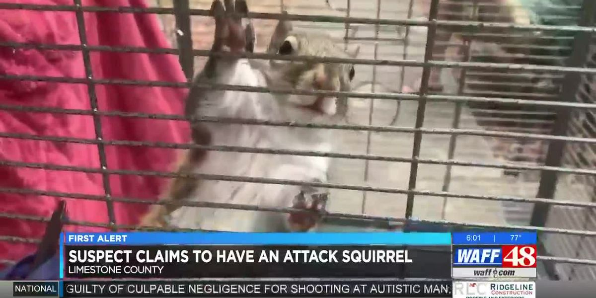 North Alabama deputies find 'attack squirrel' during meth bust