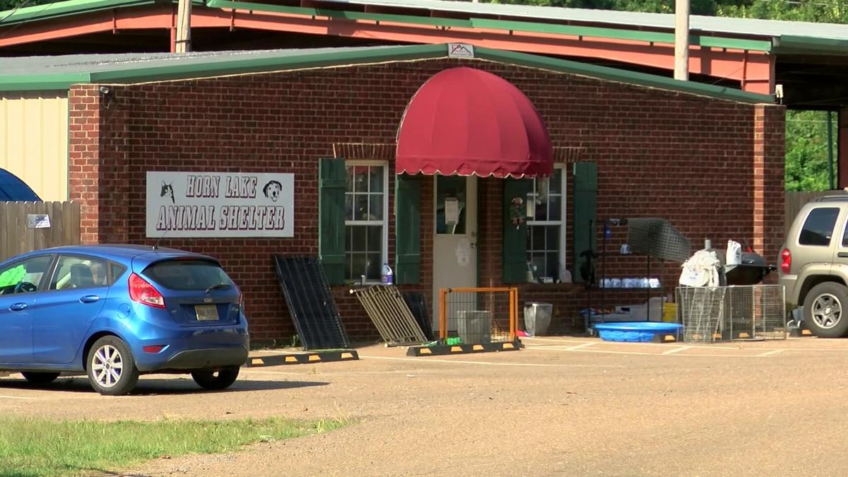 City of Horn Lake investigating animal shelter director's Facebook post