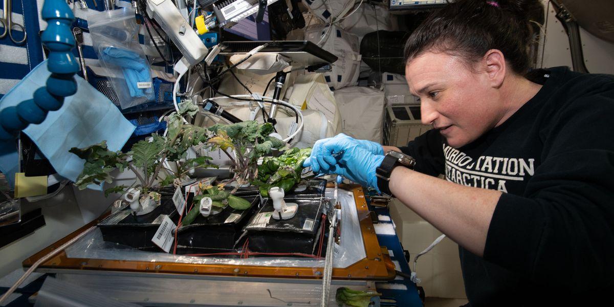 Breakdown: Why NASA is growing plants in space
