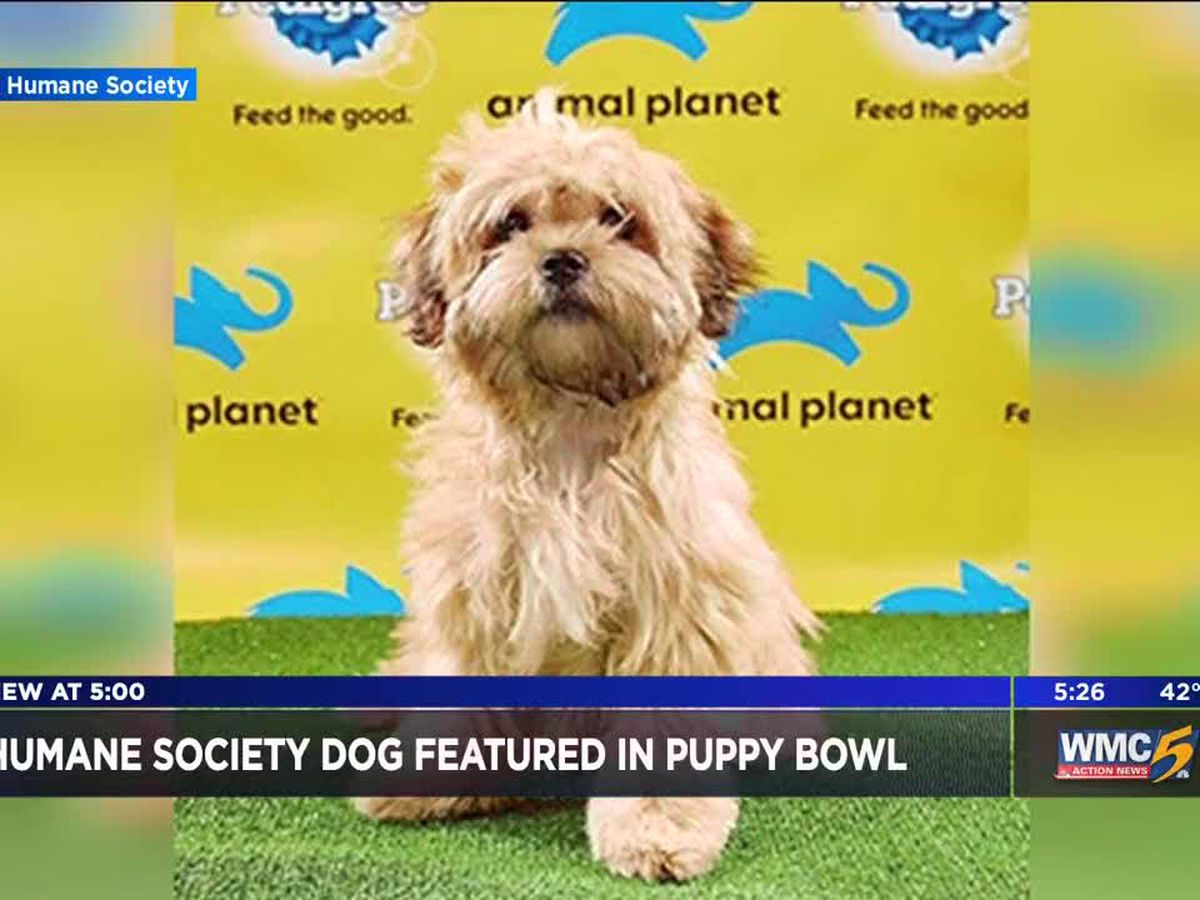 Memphis pup featured in Animal Planet's Puppy Bowl