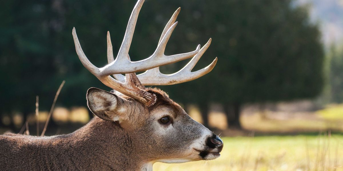 Chronic Wasting Disease confirmed in additional MIssissippi counties, per state wildlife officials