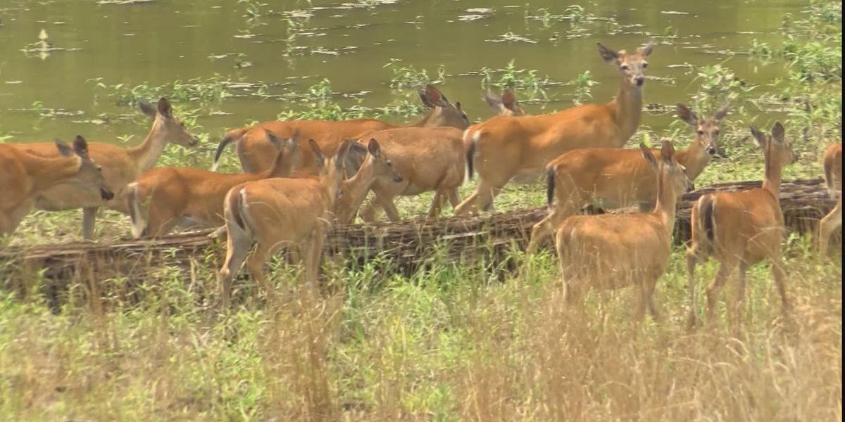 Mississippi's archery deer season set to open