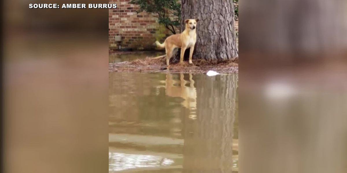 Stranded pup rescued from rising floodwaters in Jackson