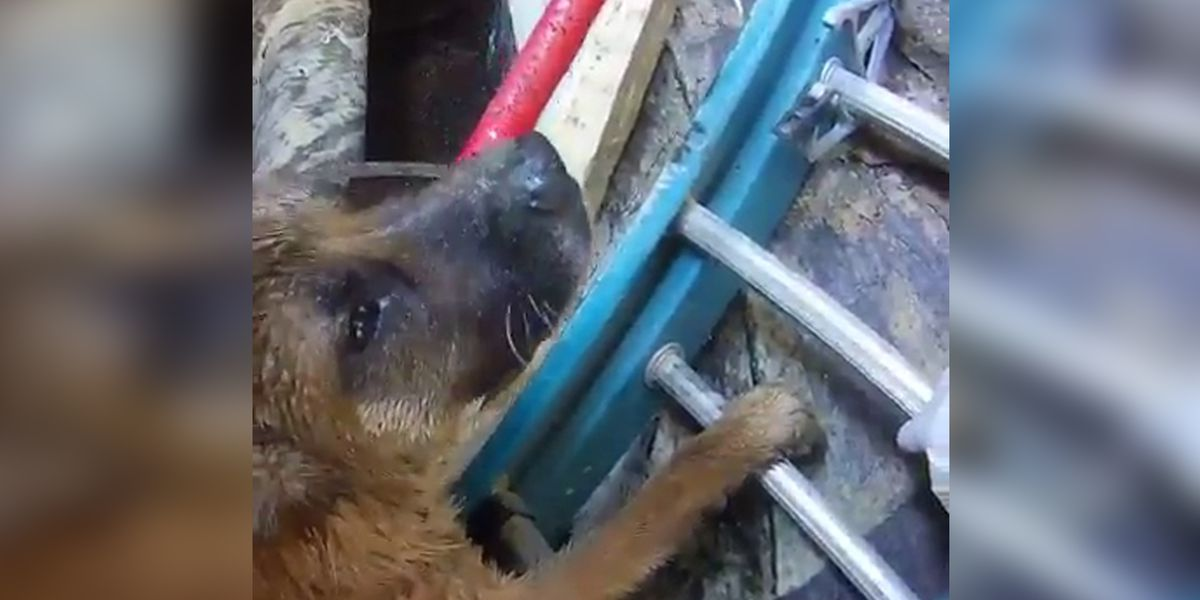MAS rescues dog from meat processing pit
