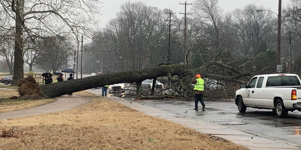Tree falls across busy intersection