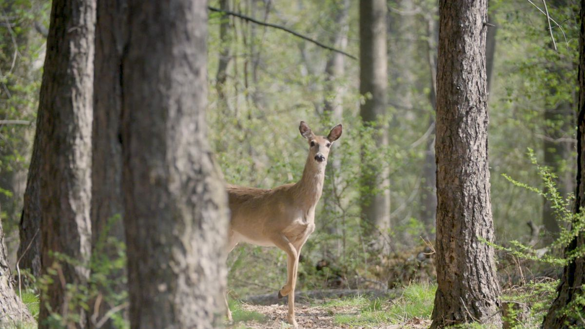 Fall driving: Tips to avoid hitting deer