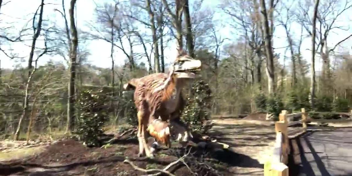 Dinosaurs taking over the Memphis Zoo