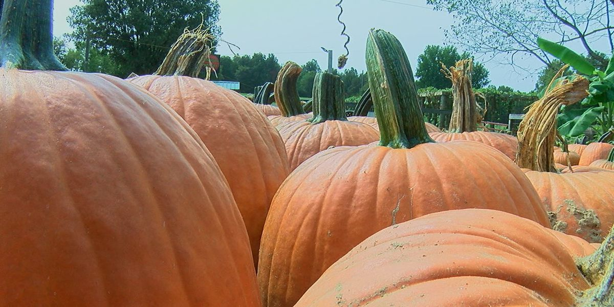 Bottom Line: Consumer Reports investigates canned pumpkin