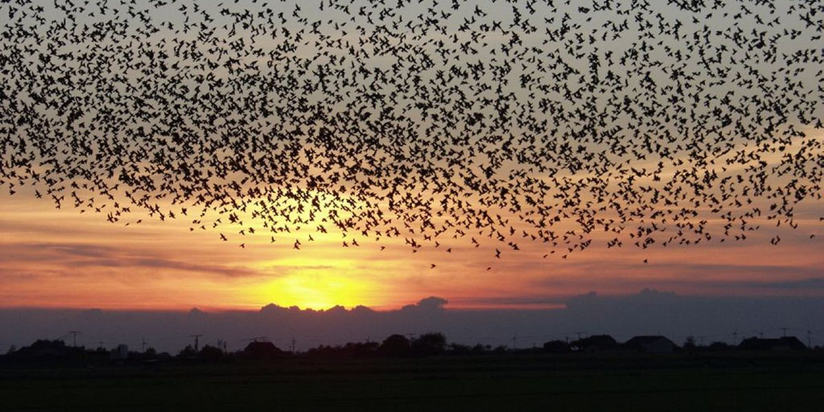 BREAKDOWN: Why birds migrate