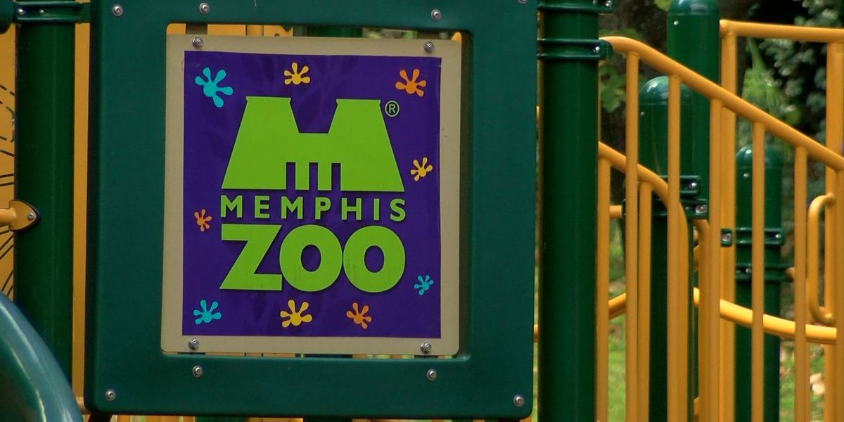 VIDEO: Memphis Zoo animals get Christmas gifts early