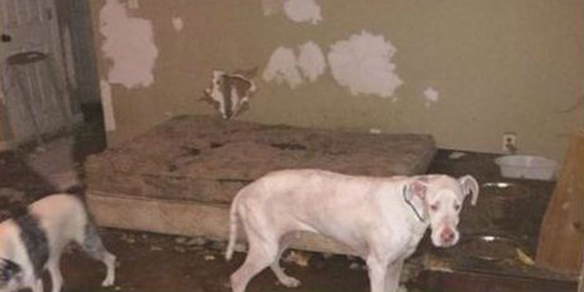 Authorities investigating after photos shows filthy animal shelter conditions
