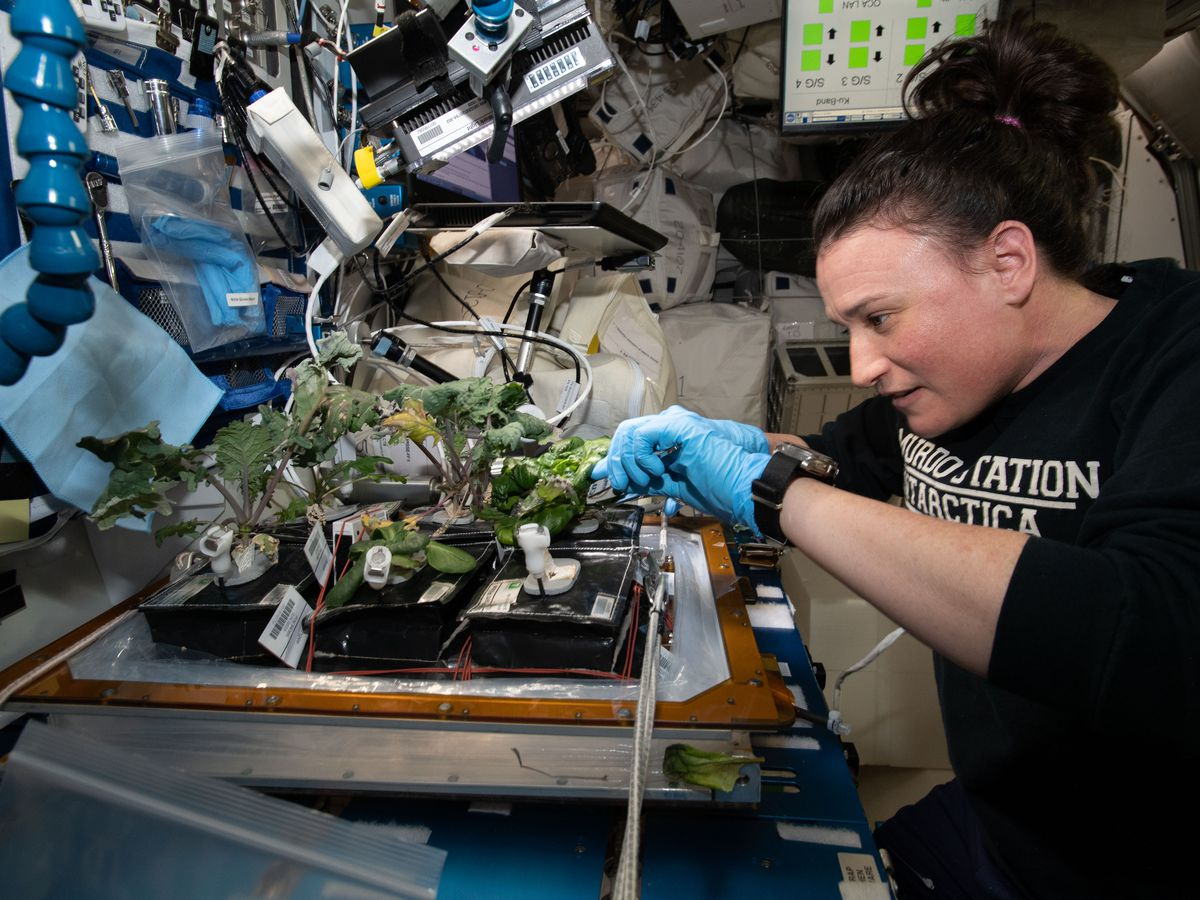 Breakdown: Why NASA is growing plants in space