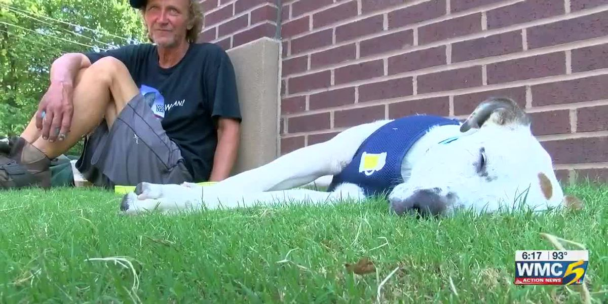 WATCH: Homeless man reunites with missing dog