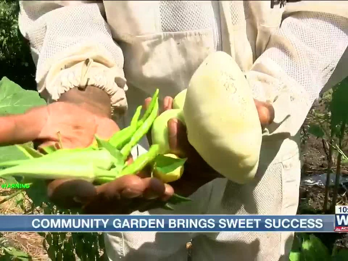 North Memphis man brings beehives, chickens and a garden to help neighborhood