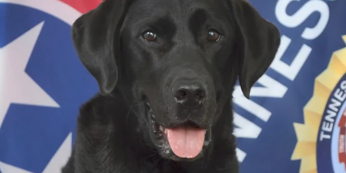 TBI K9 retires after 42 dog years of service