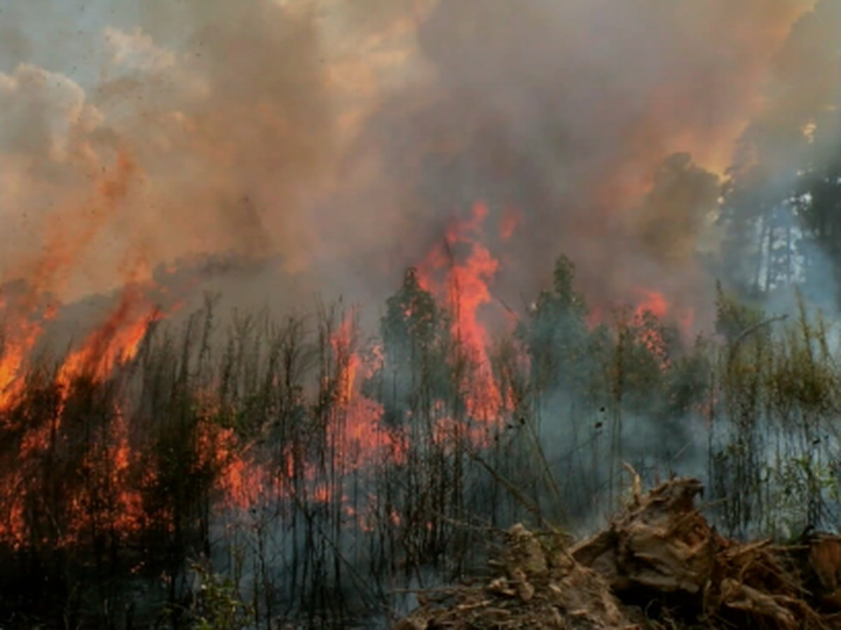 Breakdown: Wildfires: Why they spread so fast?