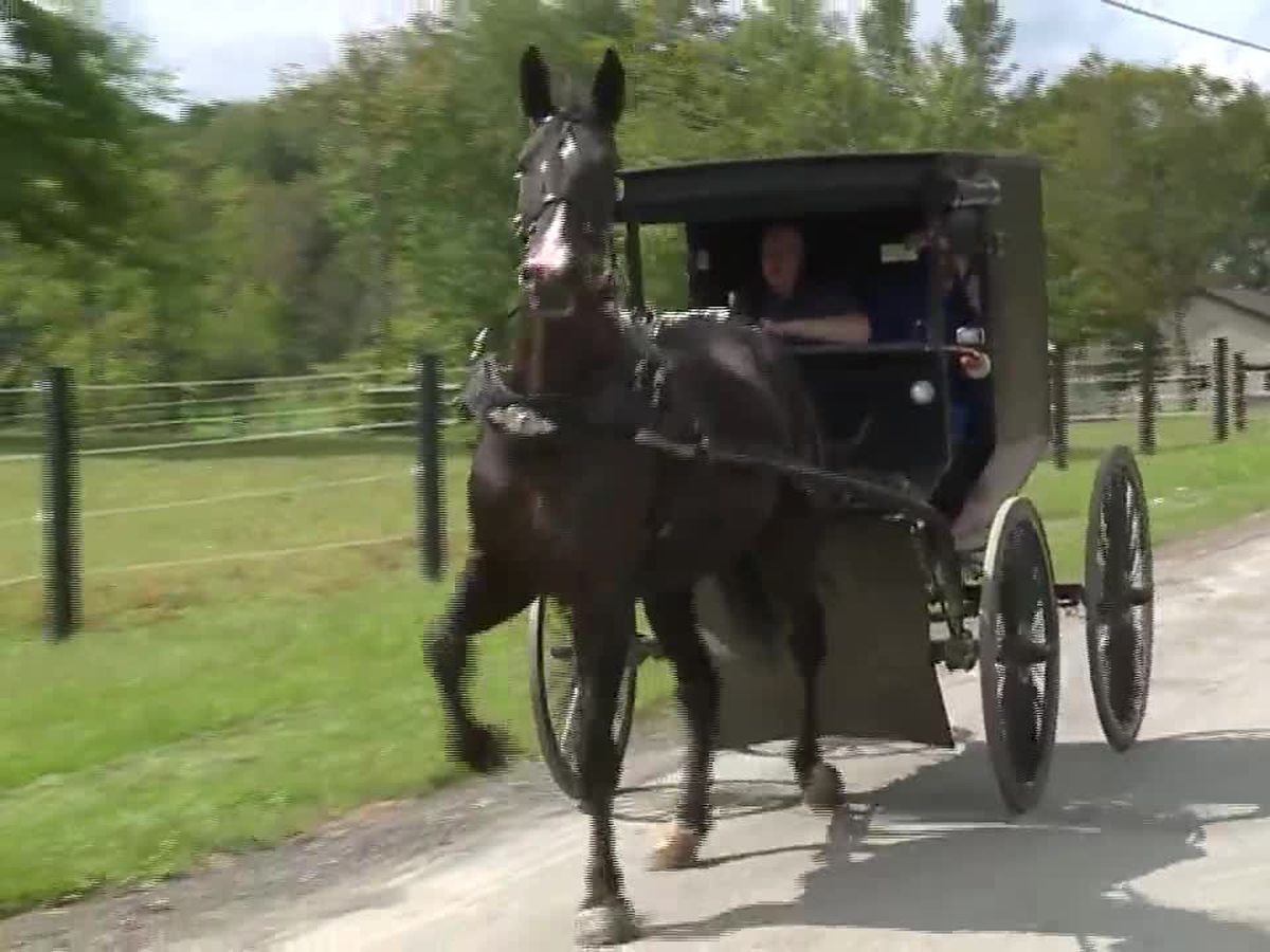 Amish buggy stopped with 2 men drinking spiked iced tea and a case of beer on the roof
