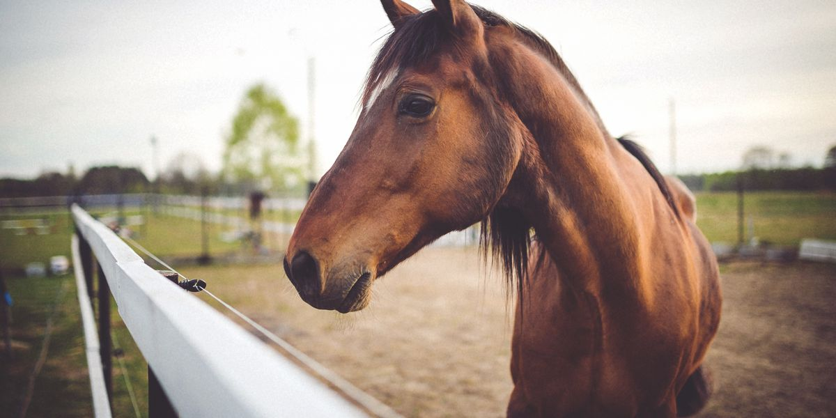 Tennessee state veterinarian warns of equine influenza