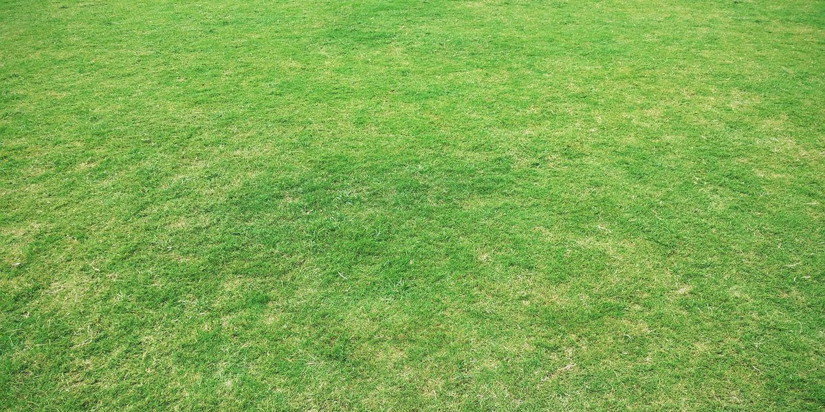 Breakdown: Why the grass looks greener after it rains