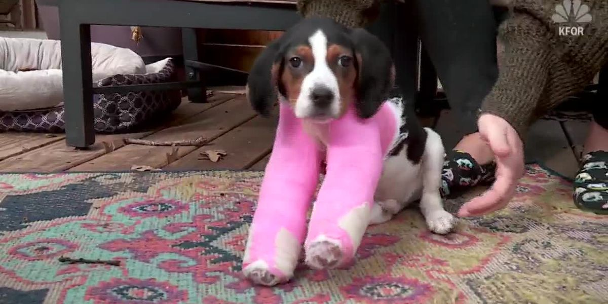 Puppy born with upside-down paws gets rare surgery
