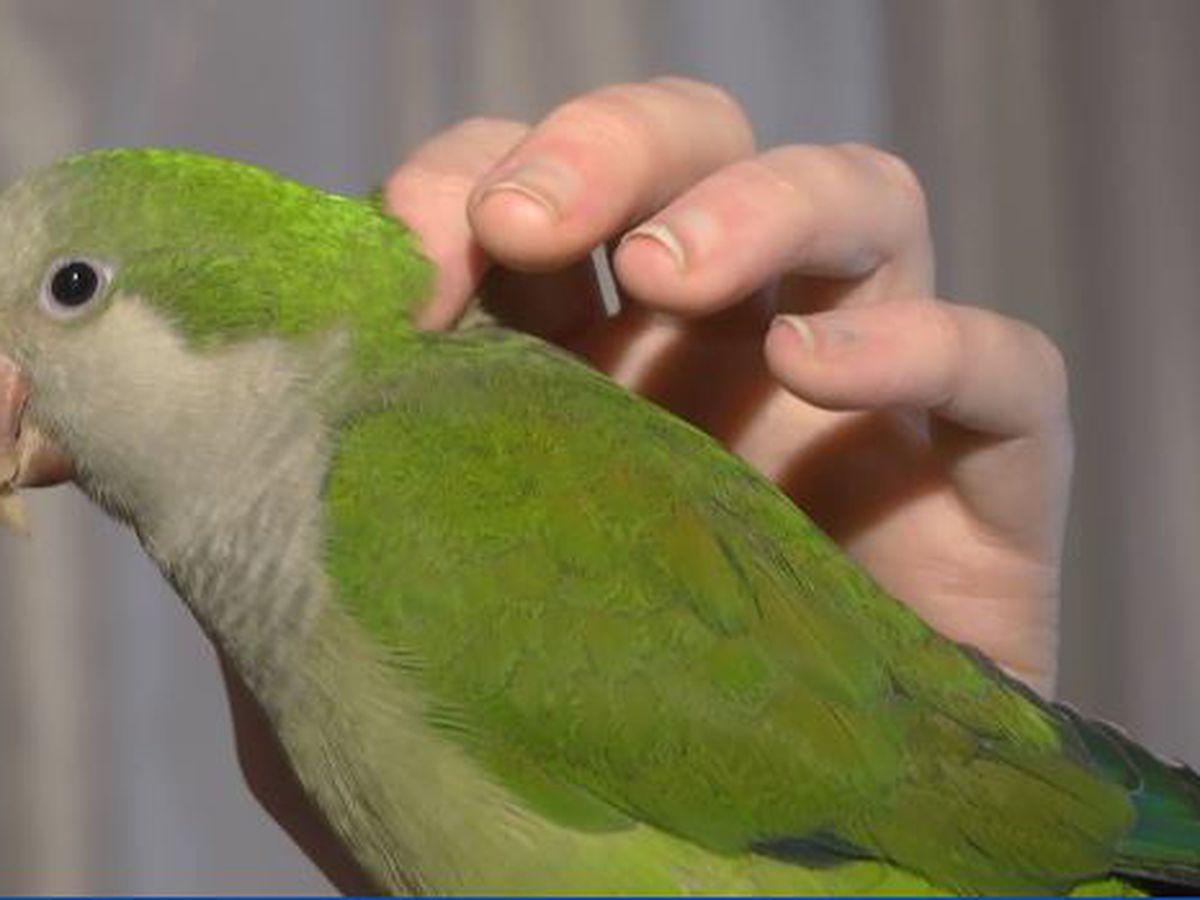 Best Life: Parrot Rescue - saving our feathered friends
