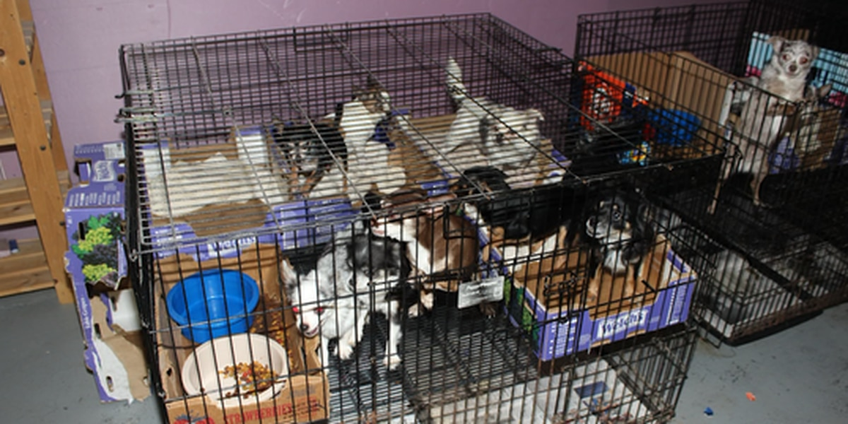 More than 130 animals have been rescued from a suspected illegal puppy mill in New Jersey