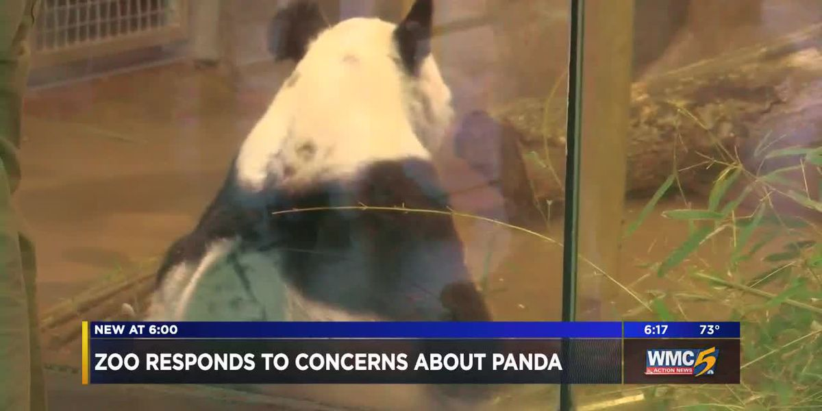 Memphis Zoo responds to concerns, says panda is perfectly healthy