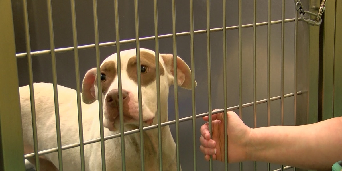 MAS hosts 'Empty the Shelters' event
