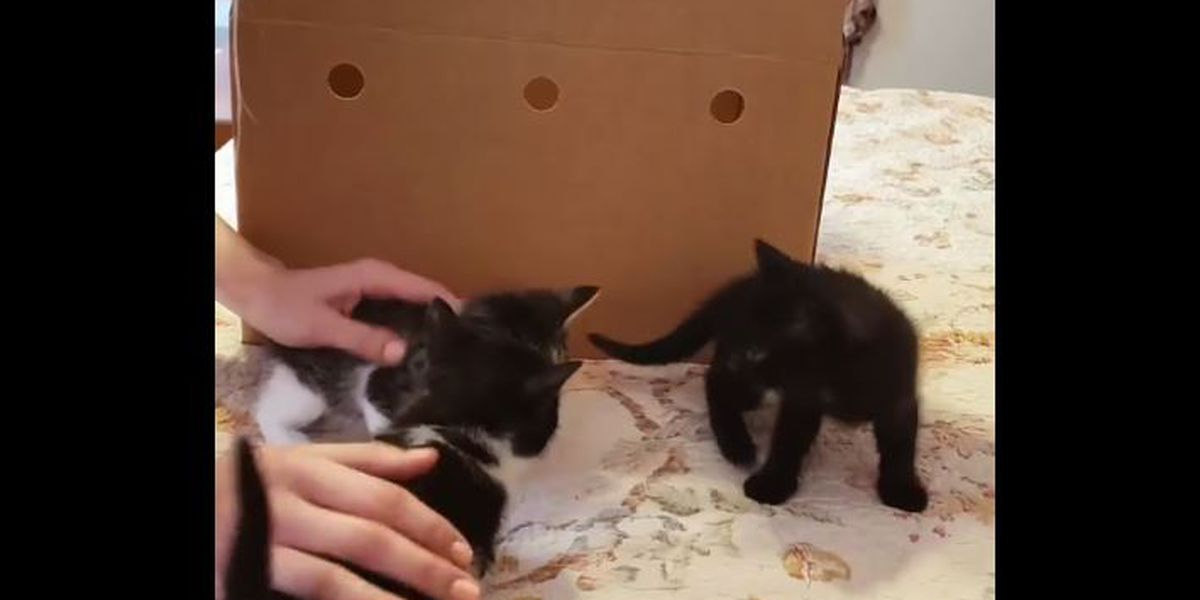 The cutest unboxing video on the internet features kittens