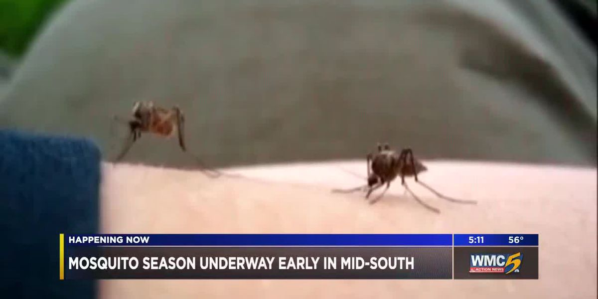 Mosquito season underway early in the Mid-South