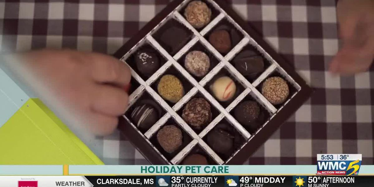 Bluff City Life, Holiday Pet Care