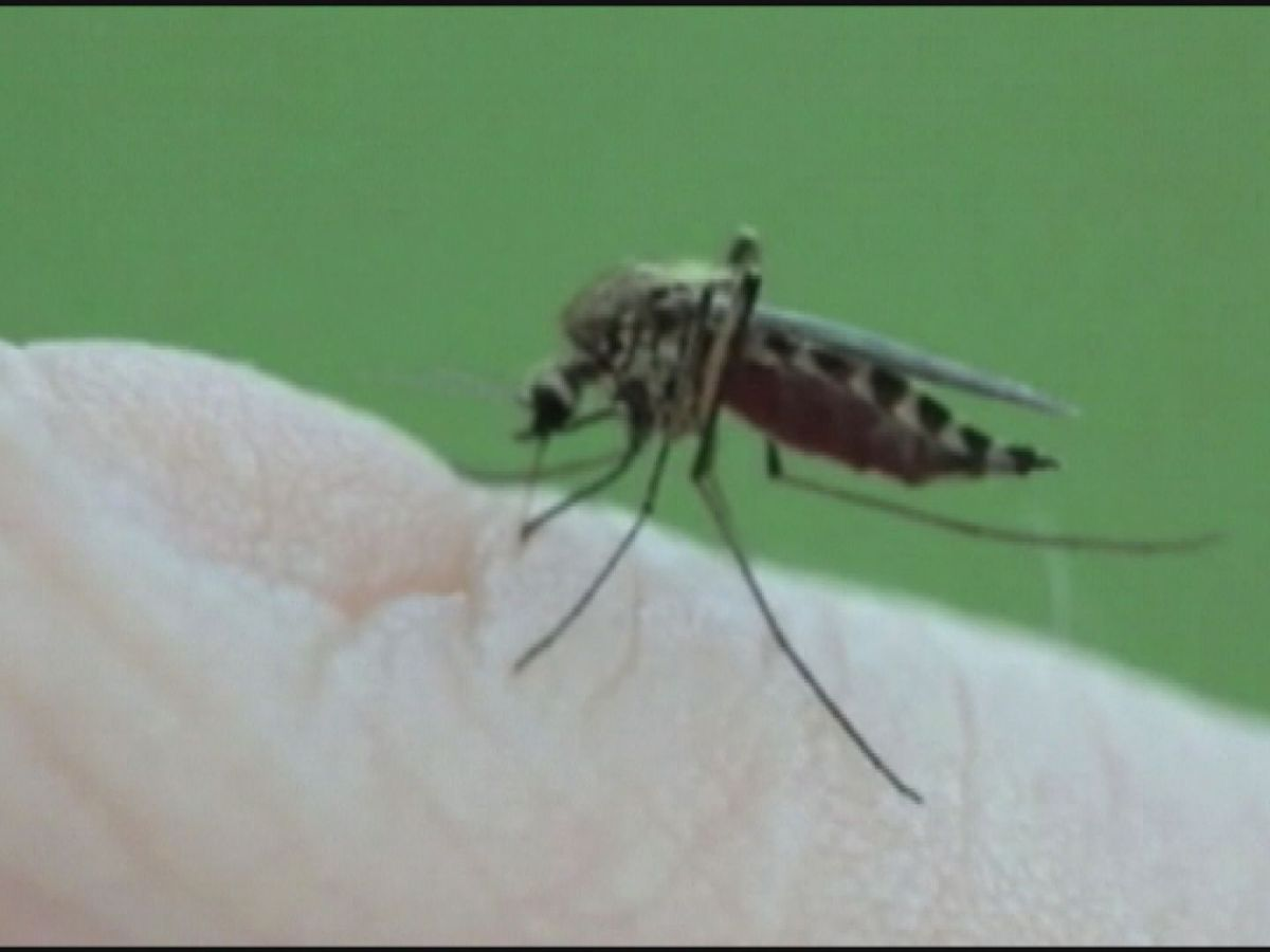 Human case of West Nile Virus found in Shelby County